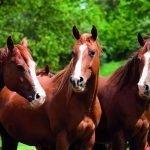 Paarden fourage en stalstrooisels - Fouragehandel de Boer